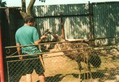 Koníčky - chov emu hnedého